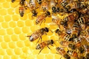Все про пчел