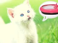 Как приучить котенка к лотку в квартире. Рубрика «Наши любимые питомцы»