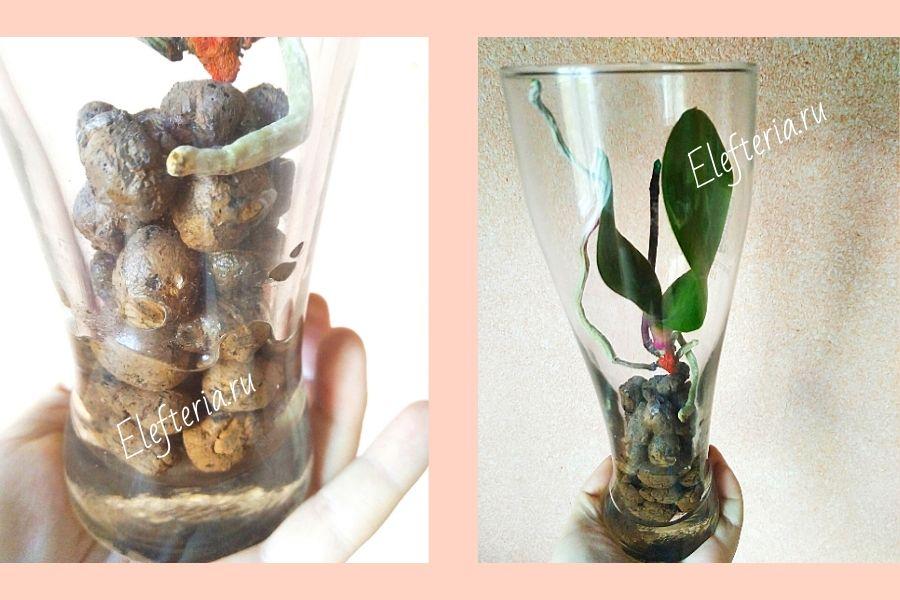 орхидеи полив в колбе