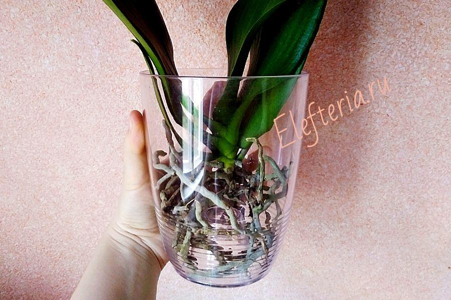полив орхидей в открытой системе